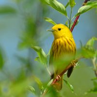 Cheep cheep little bird