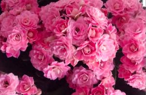Haiku About Flower