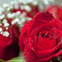 Valentines Day Riddle Poem