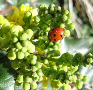 Ladybird Haiku