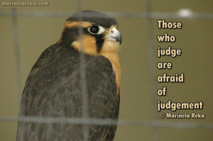 Quote about judgment, marinela reka