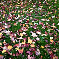 Cinquain Poems about Autumn