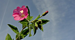 Quotes About Hearts