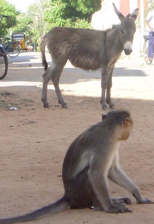 donkey-monkey_ph4