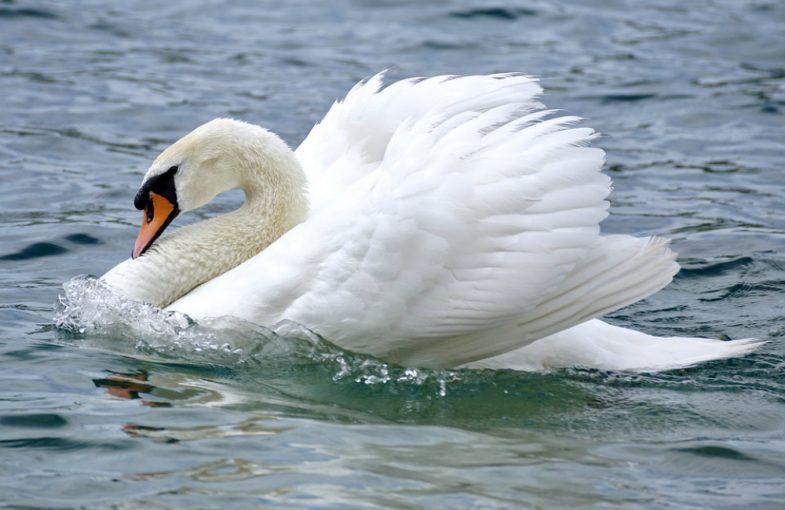 Acrostic Bird Poem