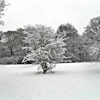 Quatrain Snow Poem
