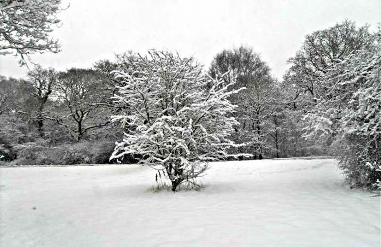 short poem about snow