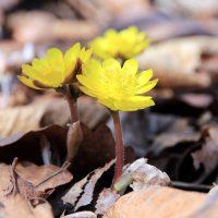 Short Poems - Alliteration Poems