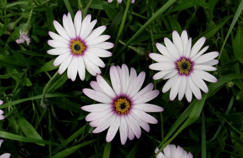 Love poem - Divine Joy