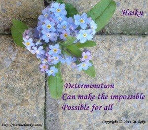 Haiku about determination, marinela reka