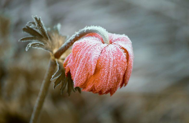 Love Poems - Heart-break
