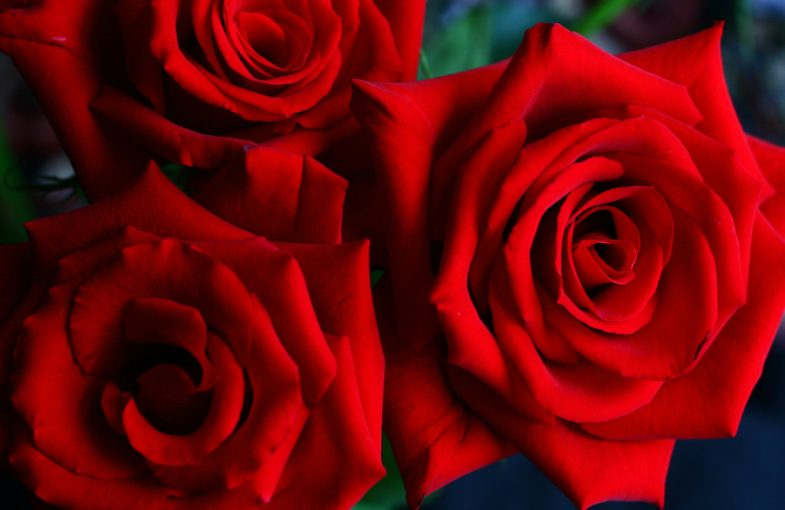 Nature Poems - Rose Poems