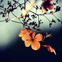 Lantern Poem - Fame